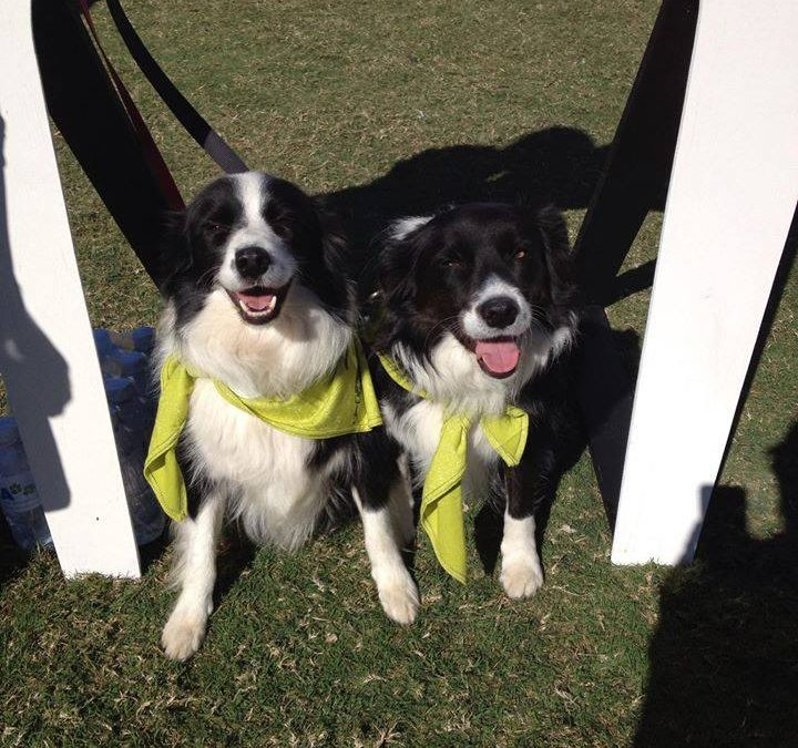 Join the RSPCA Million Paws Walk